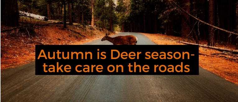 Autumn is deer season-take care on the roads